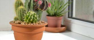 Свет и температура для кактуса