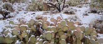 уход за кактусом зимой