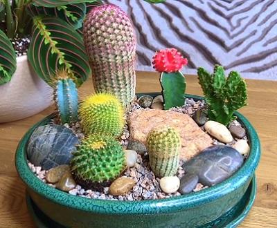Кашпо с кактусами