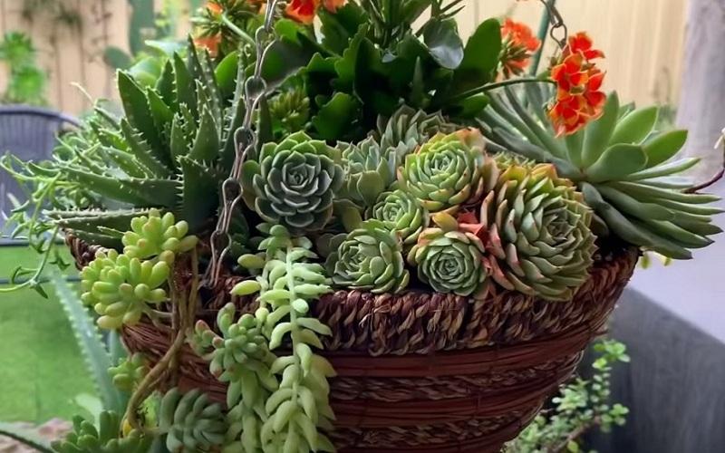 Горшок для кактуса