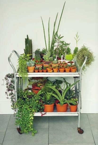 Книга о кактусах Жинель Леон