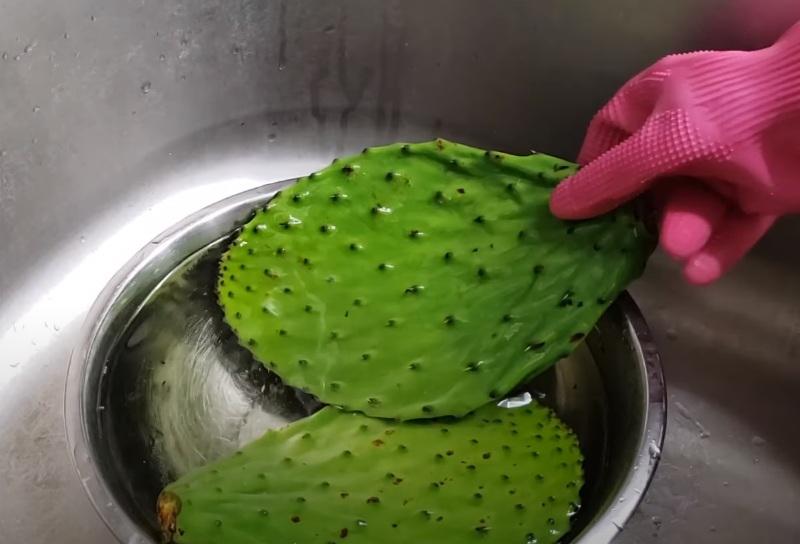 Применение кактуса опунция
