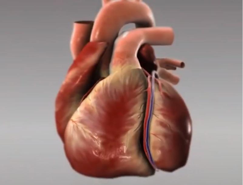 Применения кактусов при лечении сердца